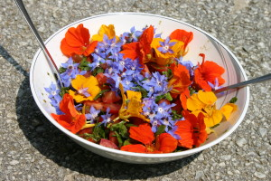 Salat mit Kapuzinerkresse und Borretsch